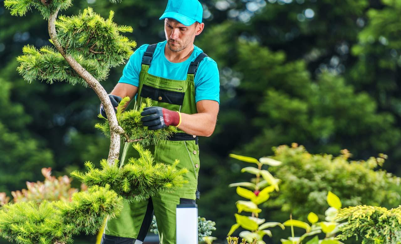 Gartenpflege Steinfurt Nordrhein-Westfalen